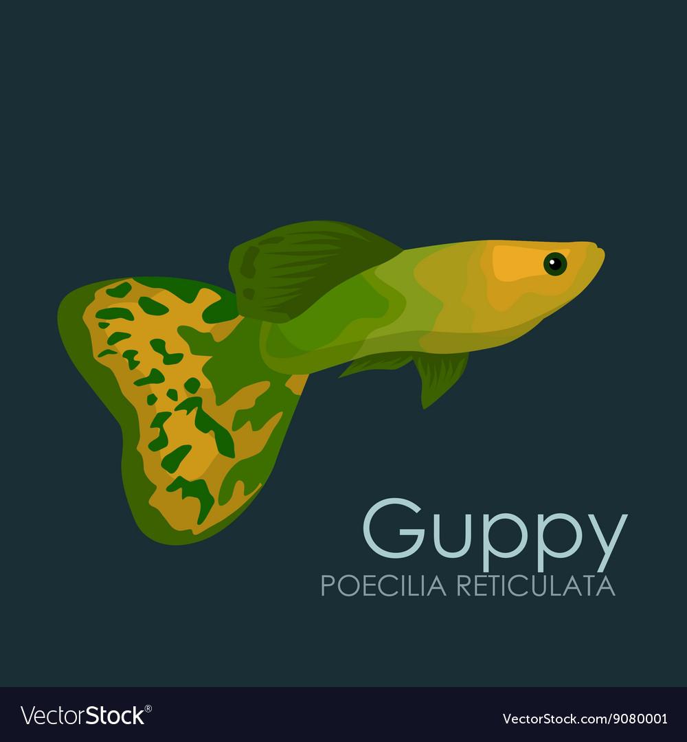Aquarium Fish Guppy Isolated Vector Image