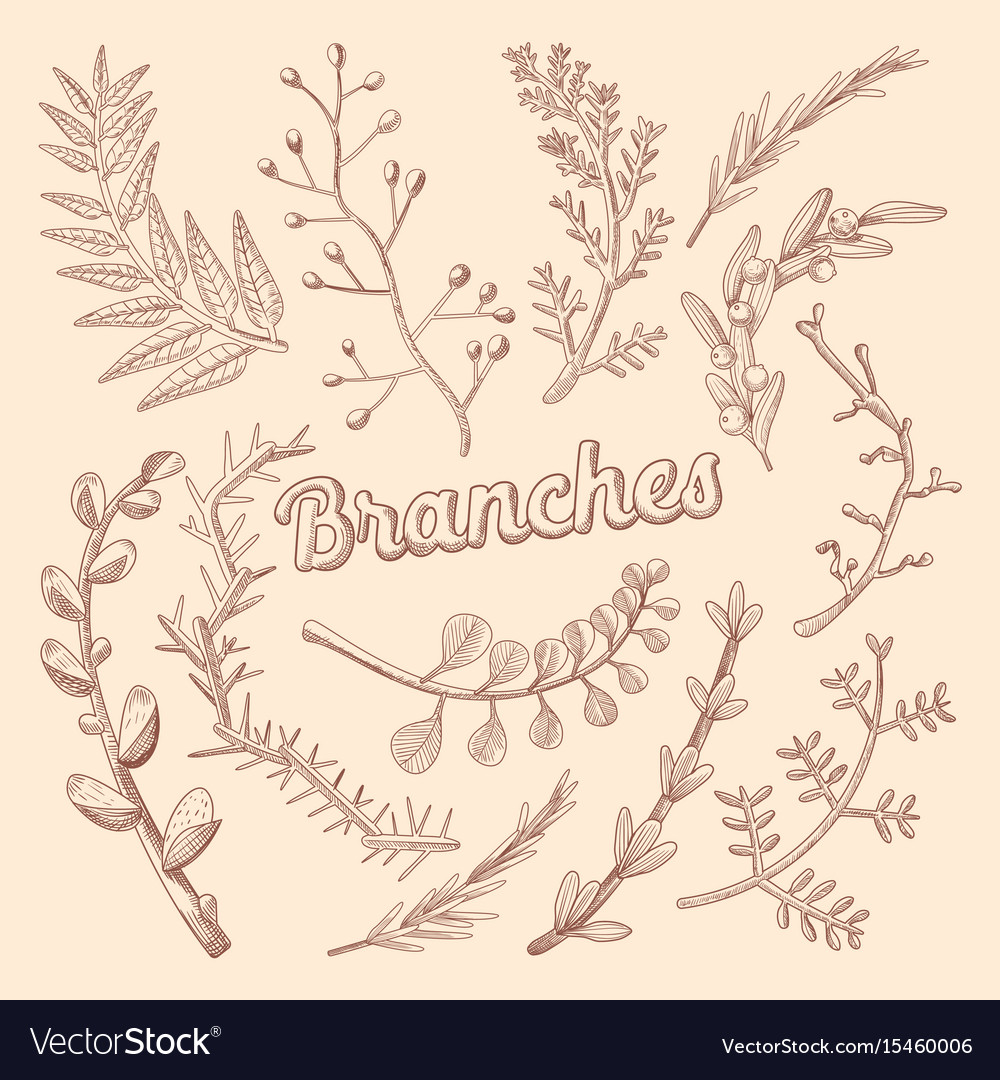Branches hand drawn floral doodle rustic plants