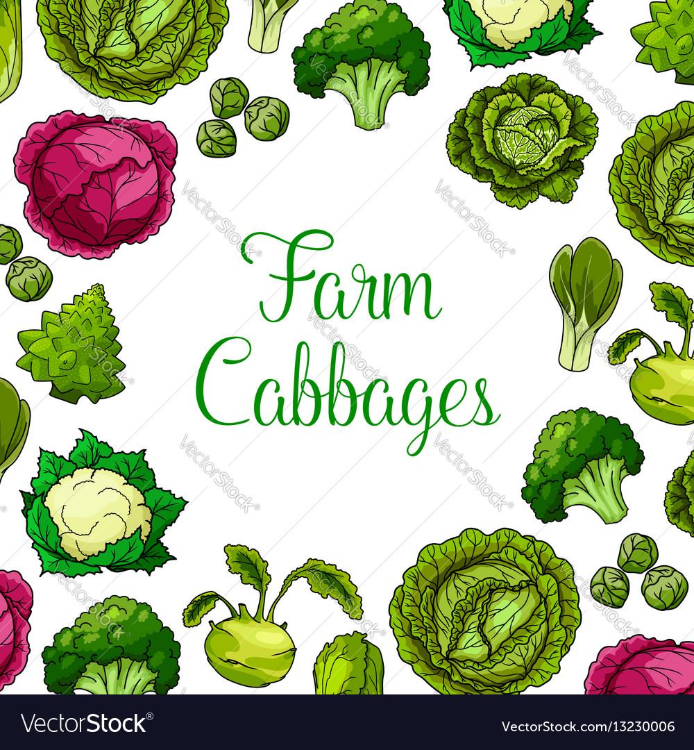 Cabbage leafy vegetables poster