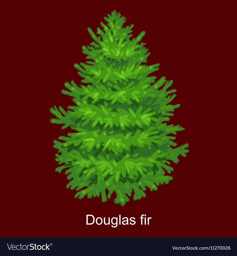 Douglas Fir Christmas Tree.Christmas Tree Like Douglas Fir For New