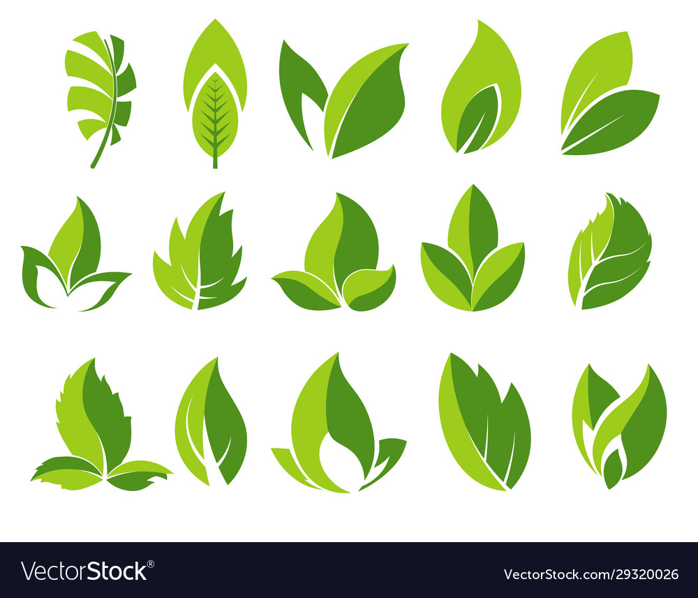 Green leaf and leaves abstract icons set