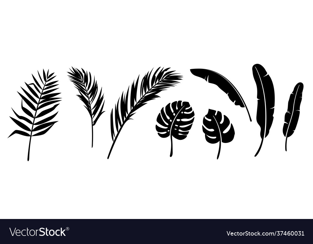 Palm leaves silhouette set background