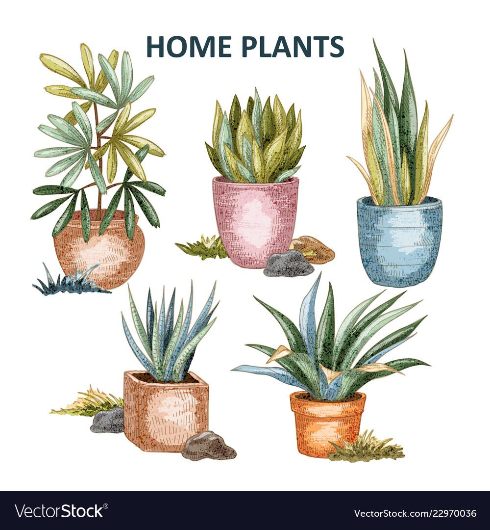 Home plant 01