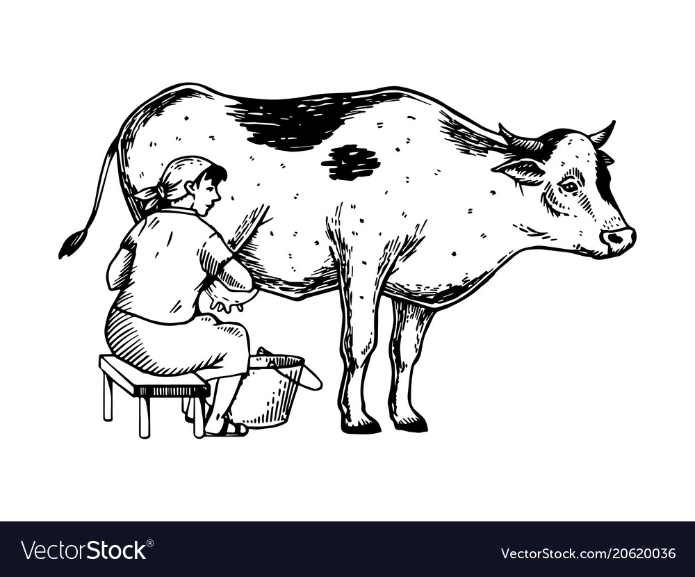 Woman Milk Cow Engraving Vector Image