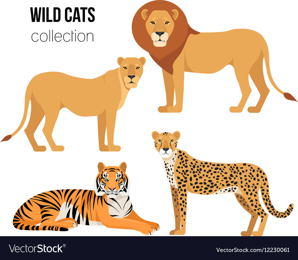 Predatory Animals Lion Lioness Cheetah Tiger Vector Image