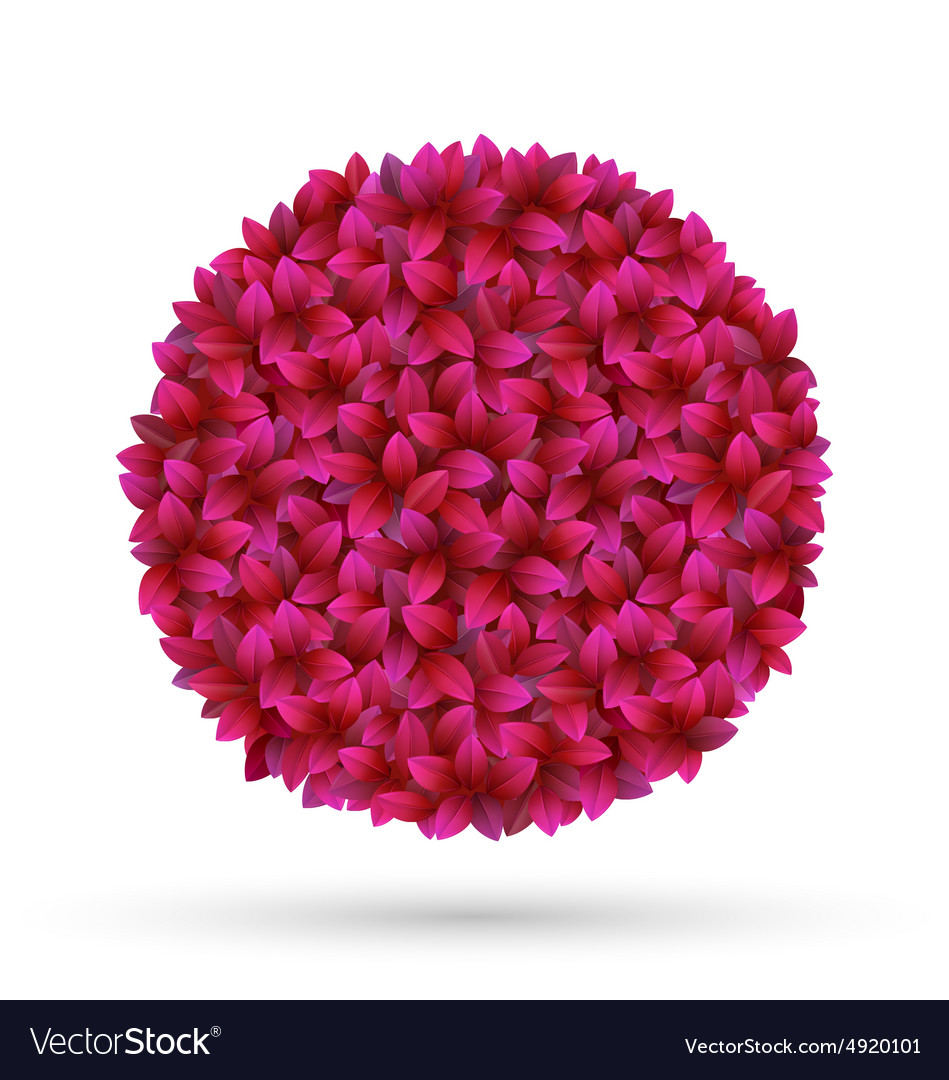 Pink flower petals circle frame isolated on white vector image