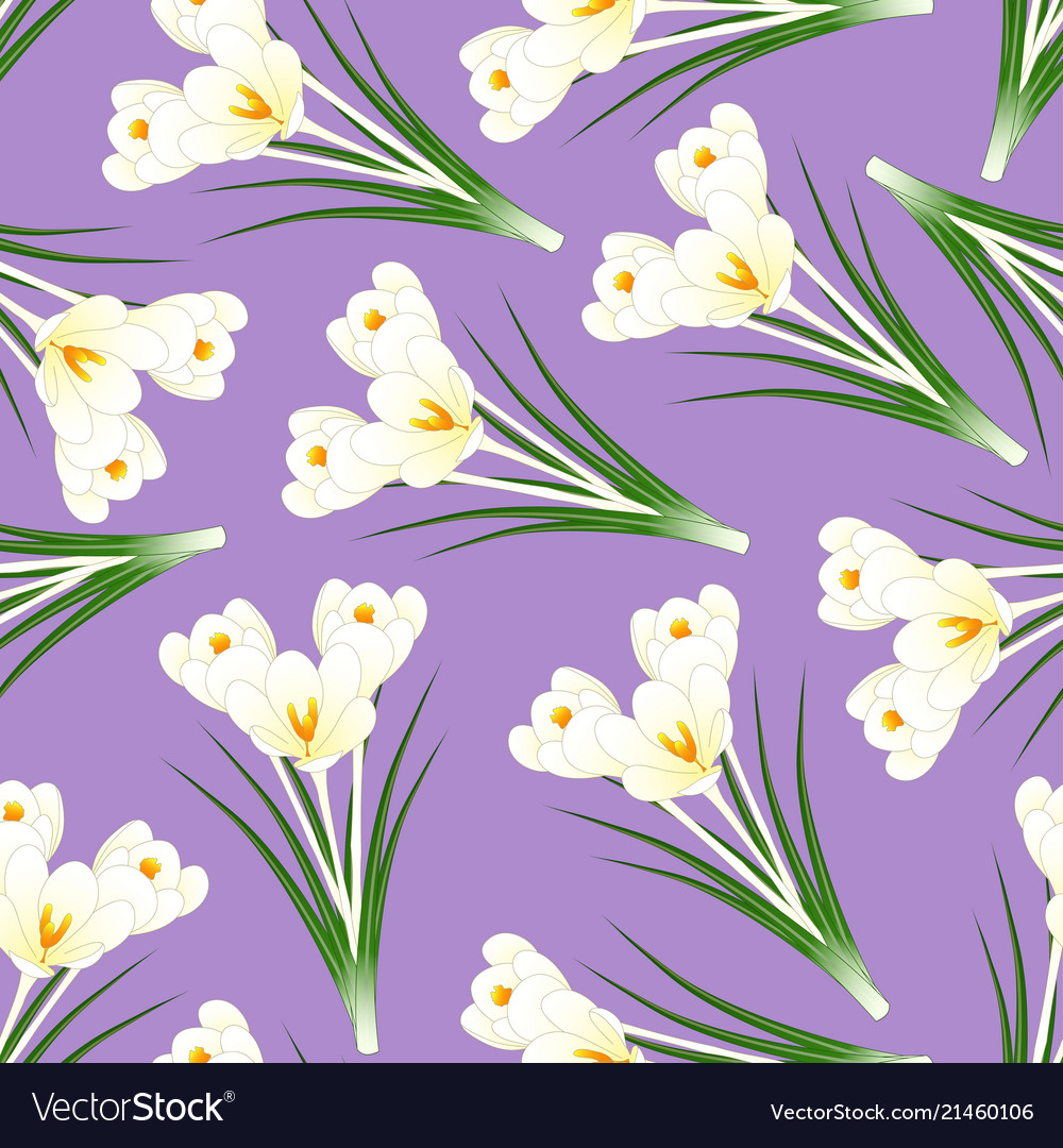 White crocus flower on light purple background vector image mightylinksfo