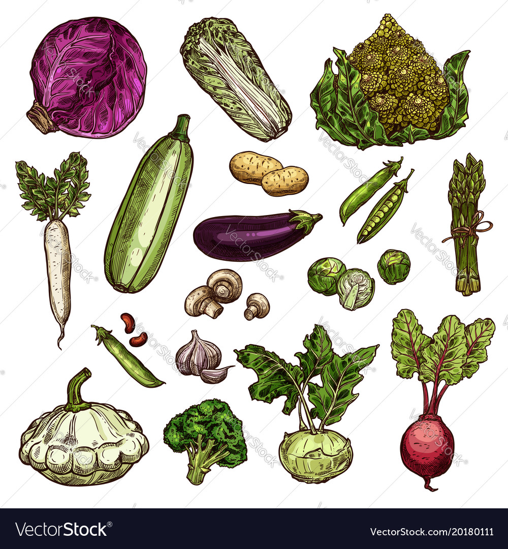 Set of vegetable icons