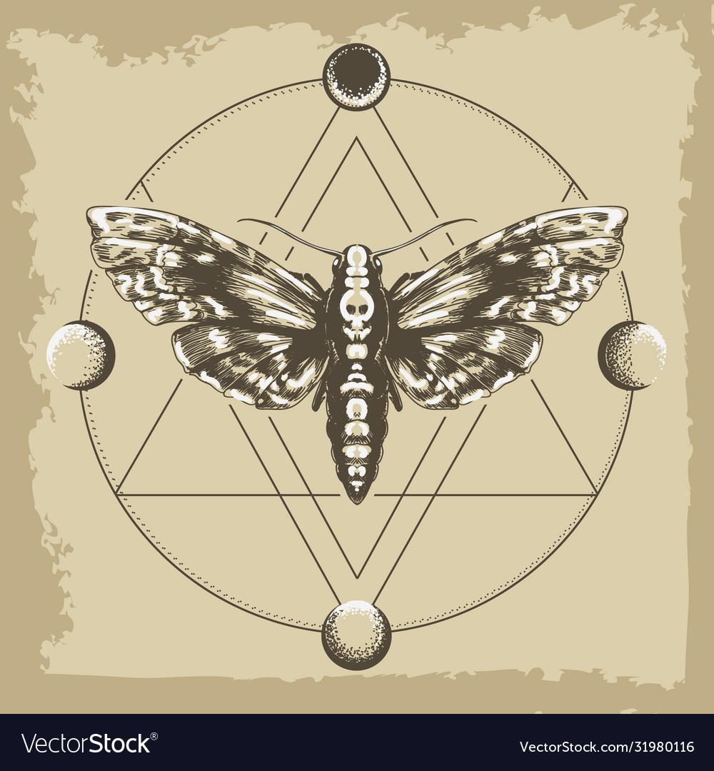 Deaths head hawk moth in esoteric astrological