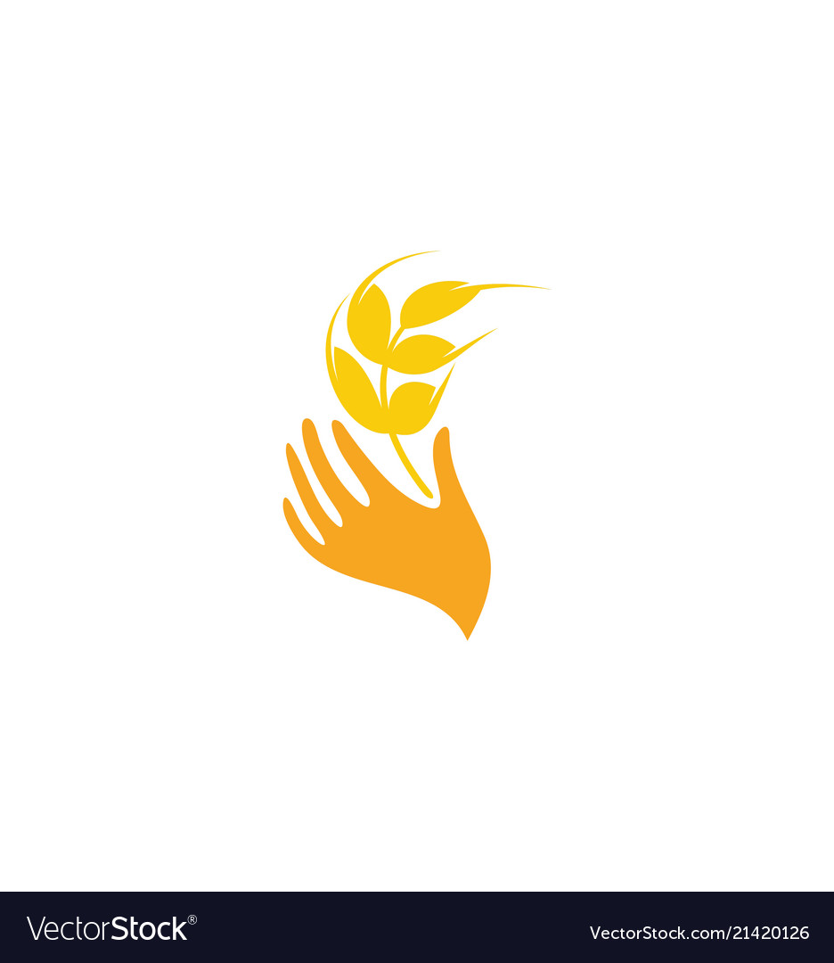 Wheat logo design grain