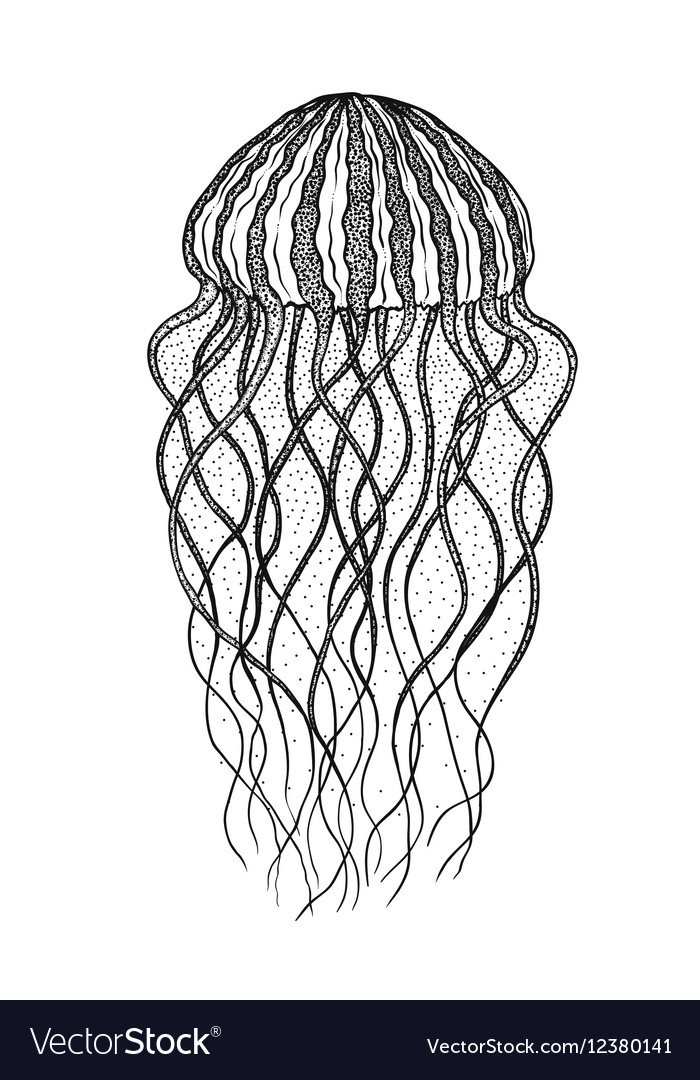 Jellyfish In Line Art Style Design For Coloring Vector Image