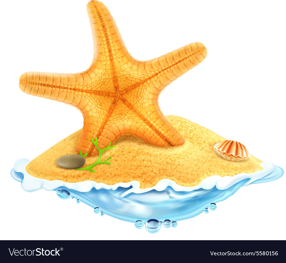 Starfish in the sand vector image