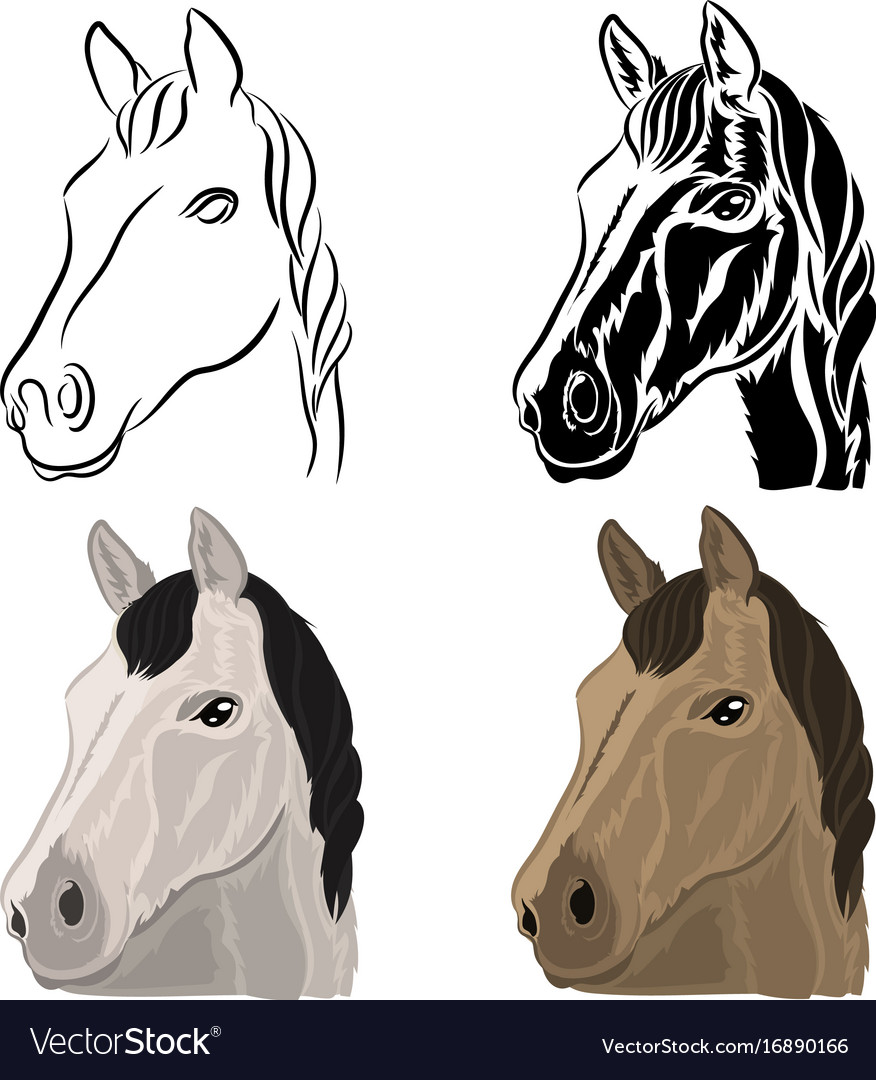 A set of drawings of a horse head