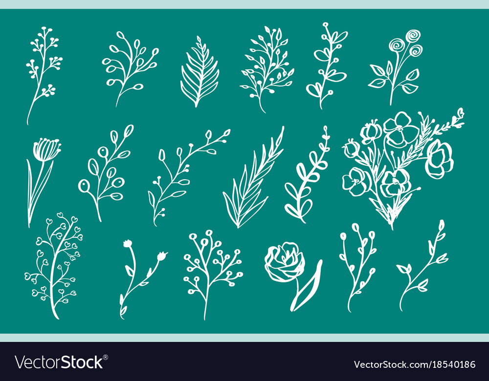 Hand drawn vintage floral elements flowers leaves