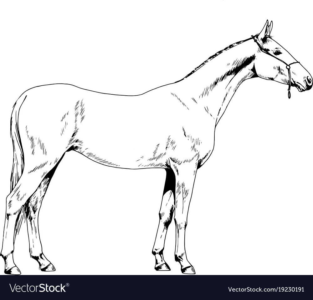 Race horse without a harness drawn in ink by hand