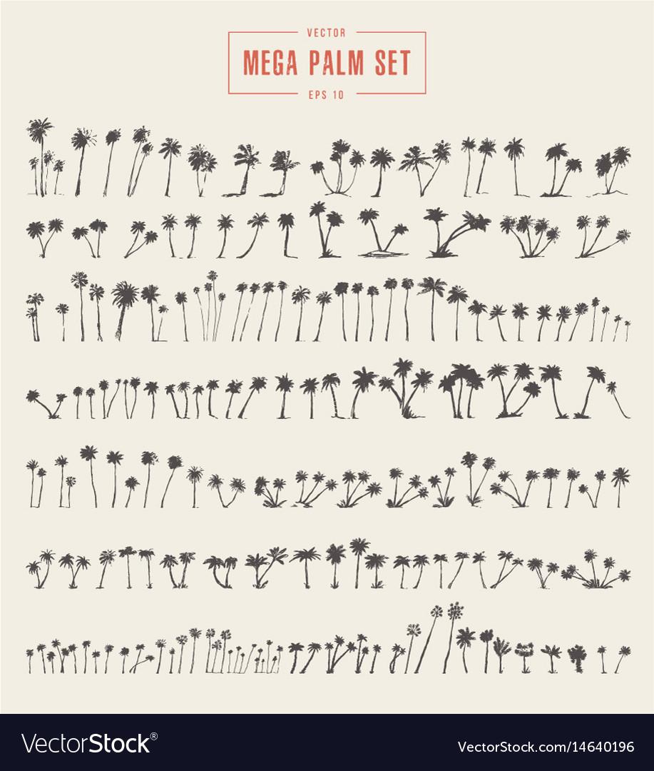 Set silhouette palm trees sketch