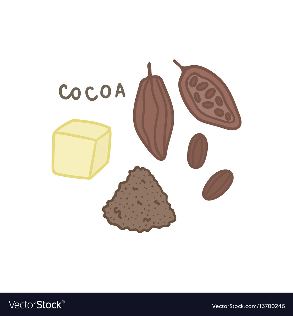 Cocoa superfood isolated on white