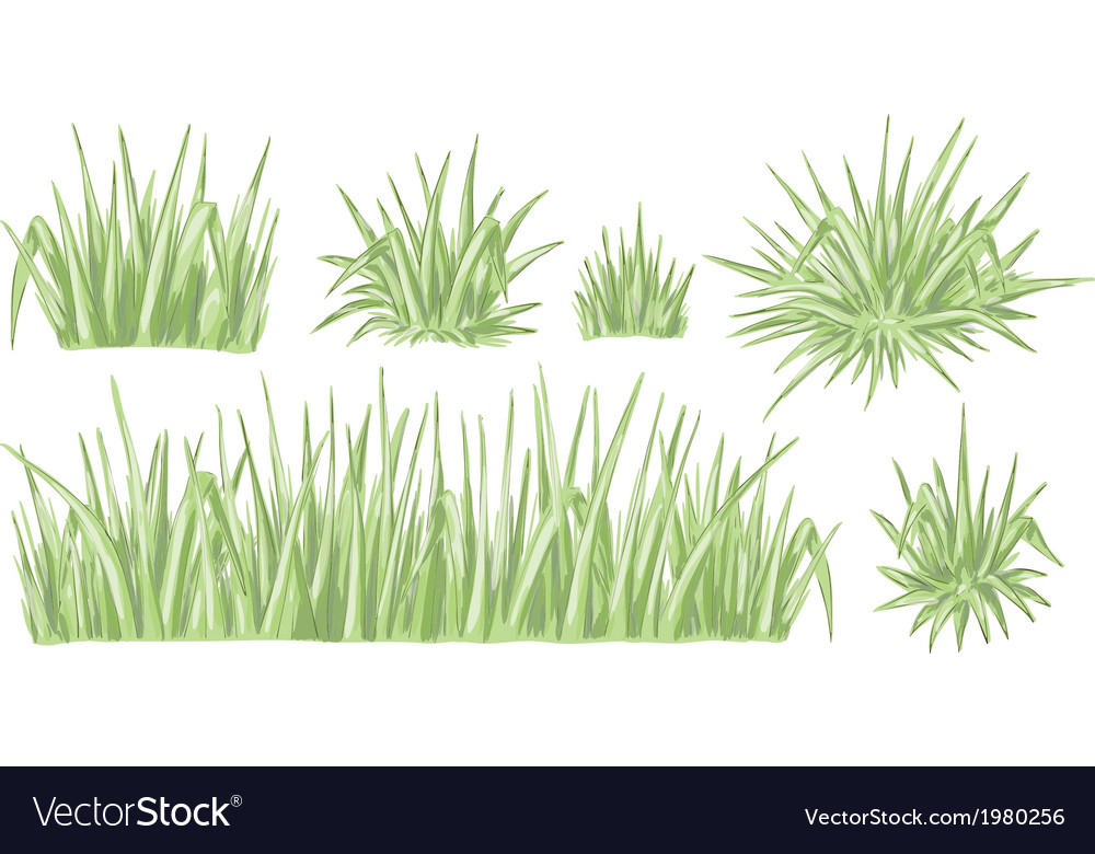 Hand drawn grass set vector image