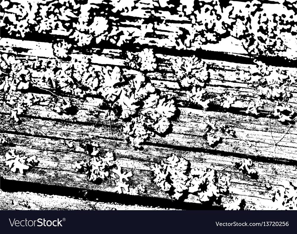 Wood texture fiber and crack