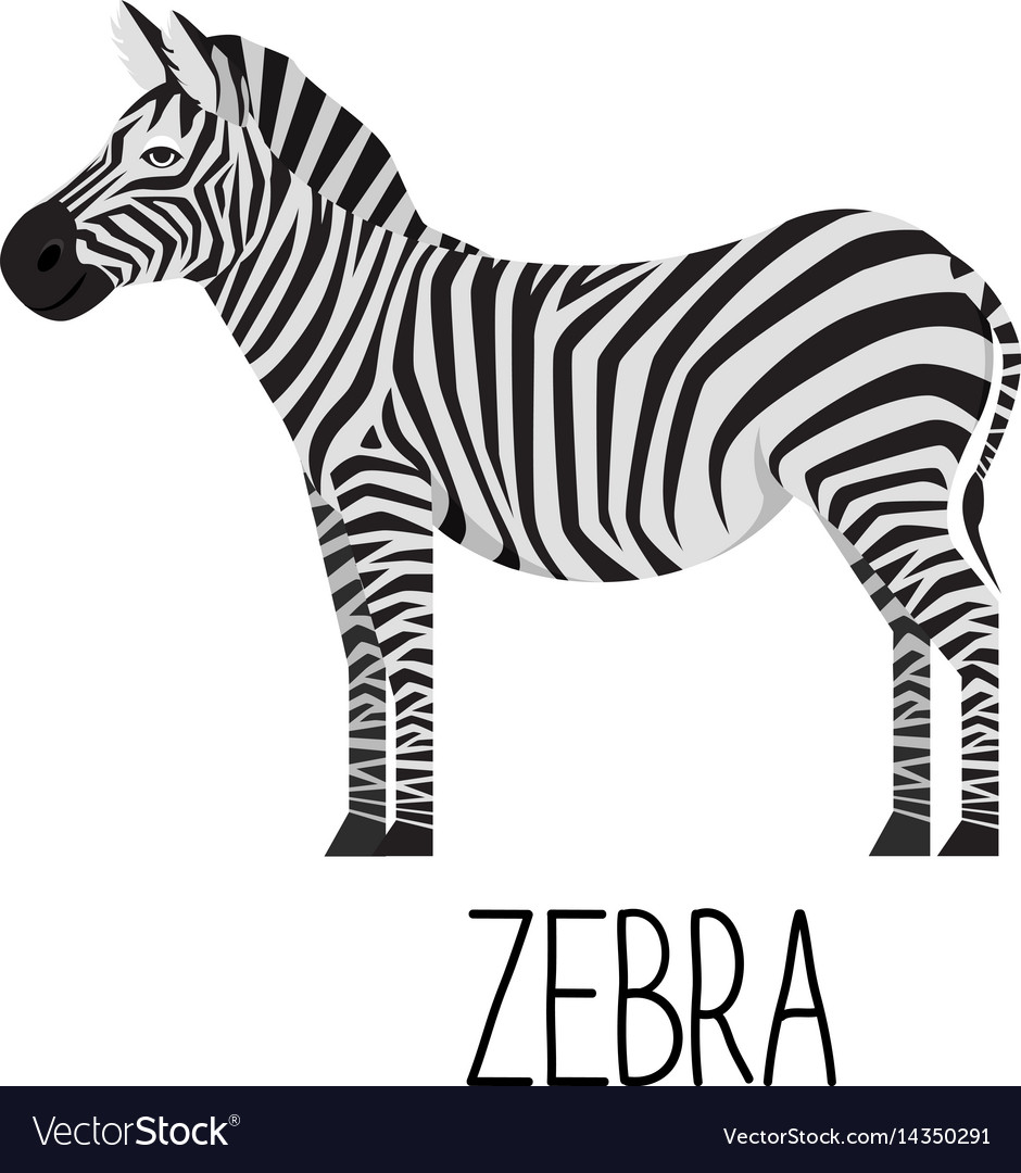 Cartoon cute zebra flat vector image