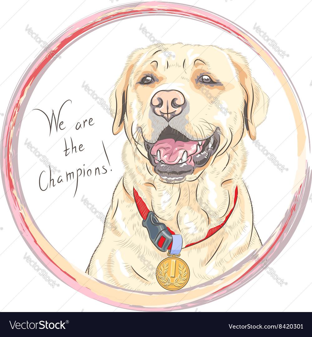 Dog breed Labrador Retriever champion vector image