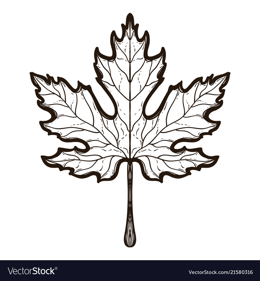 Autumn maple leaf coloring book for adults