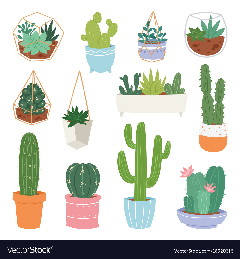 Cactus Cartoon Botanical Cacti Potted Cute Vector Image
