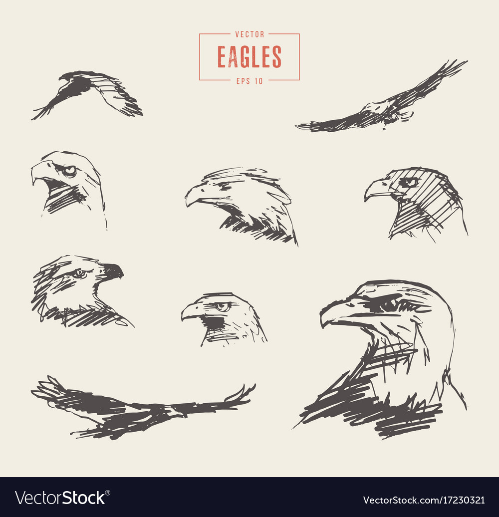 Set realistic eagles hand drawn sketch