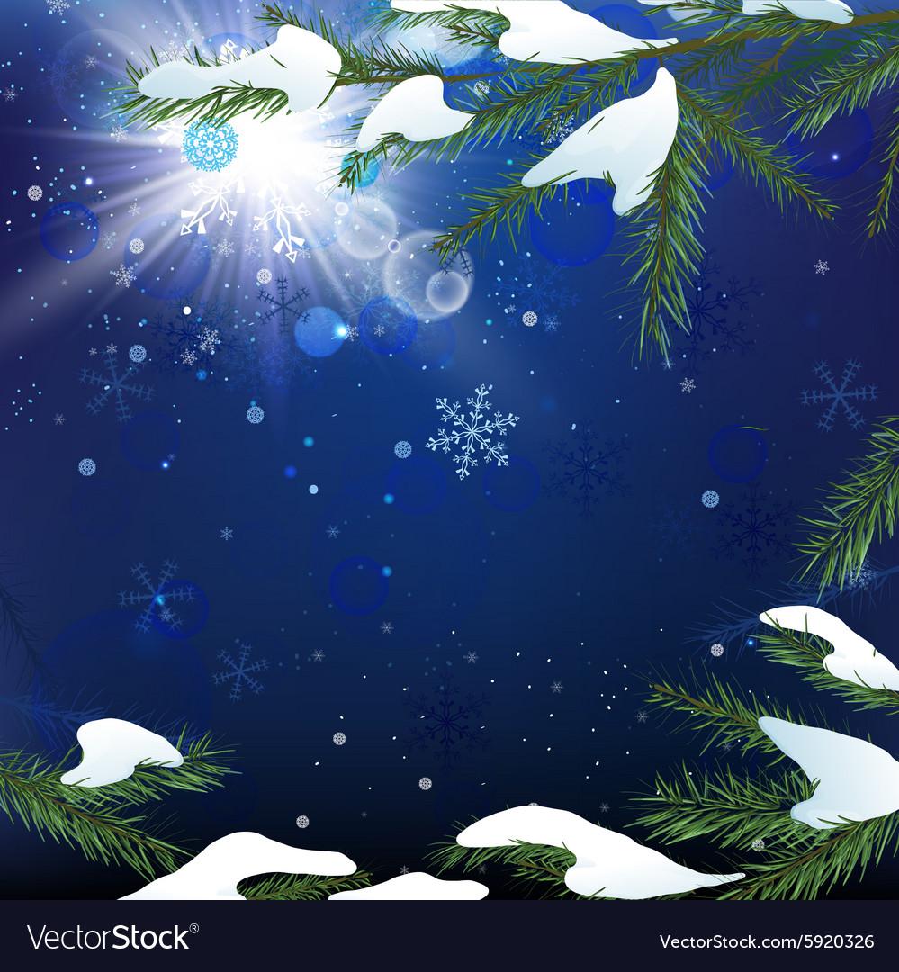 Christmas tree branch snow