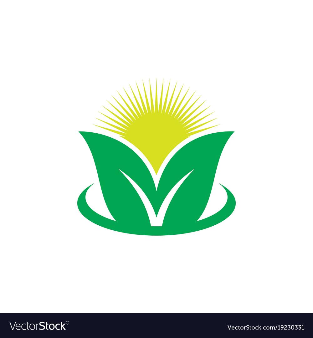Leaf sunset eco logo