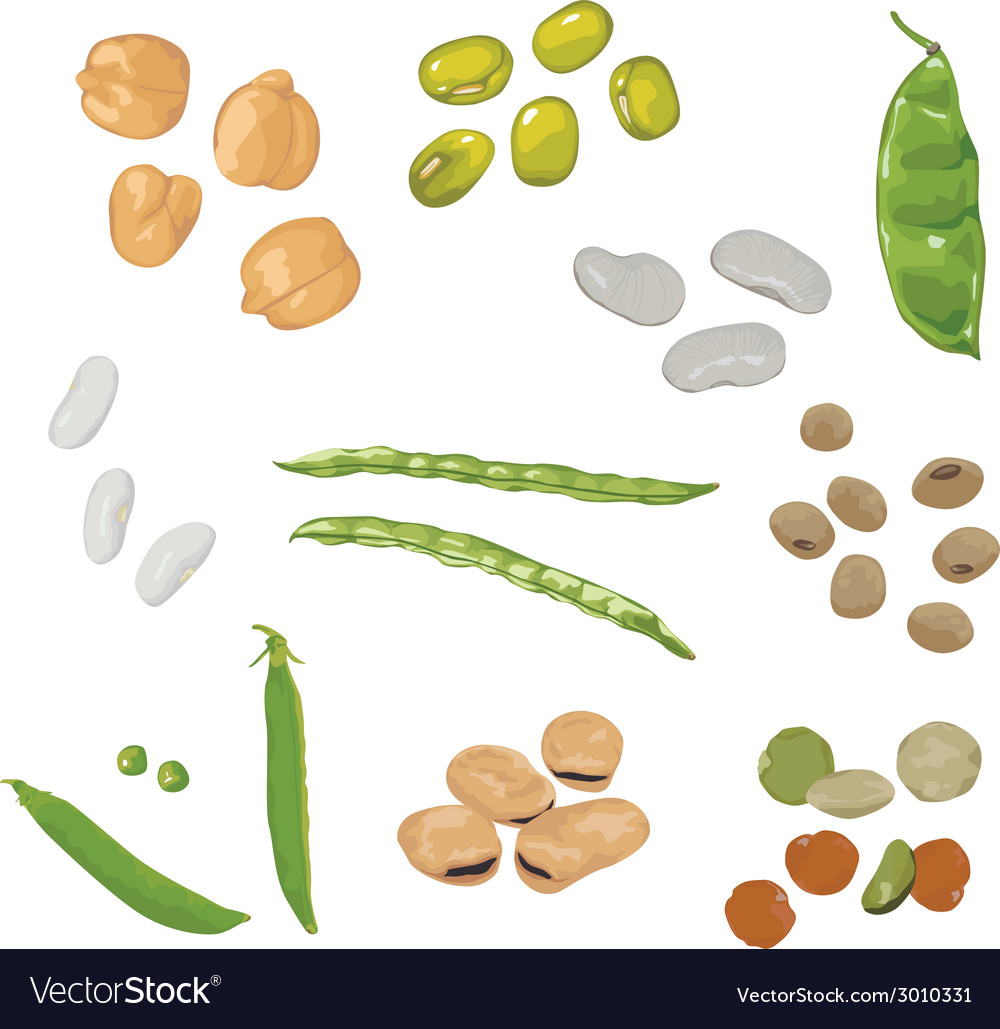 Set of different legumes