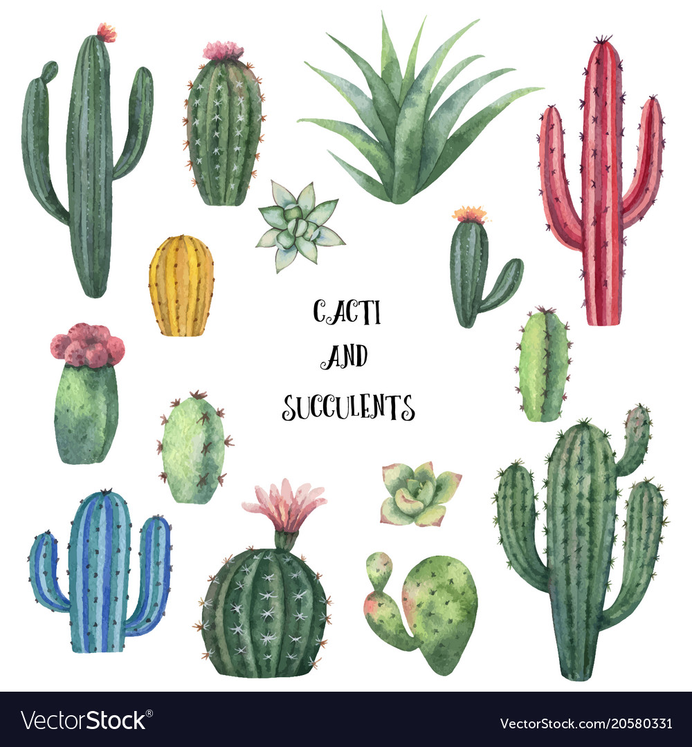 Watercolor Set Of Cacti And Succulent Royalty Free Vector