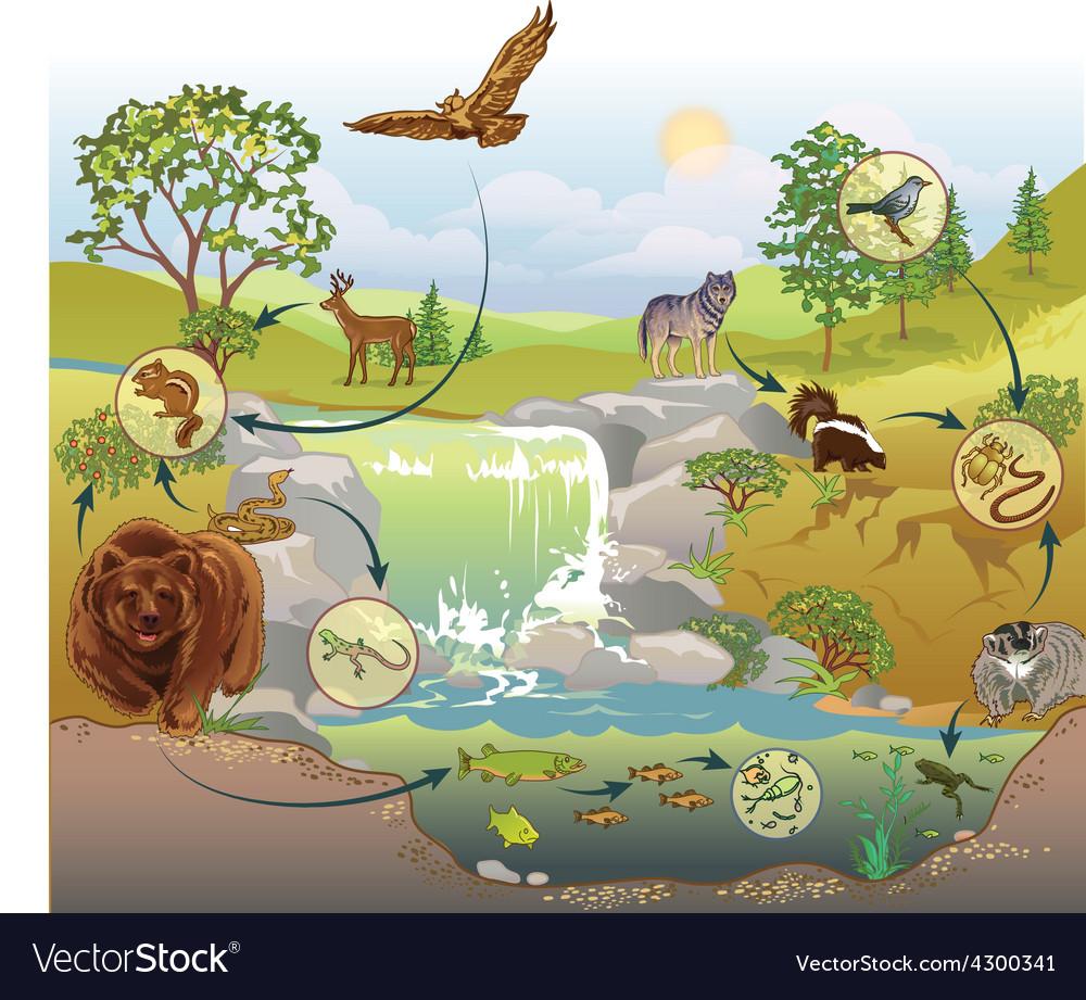 Food chain vector image