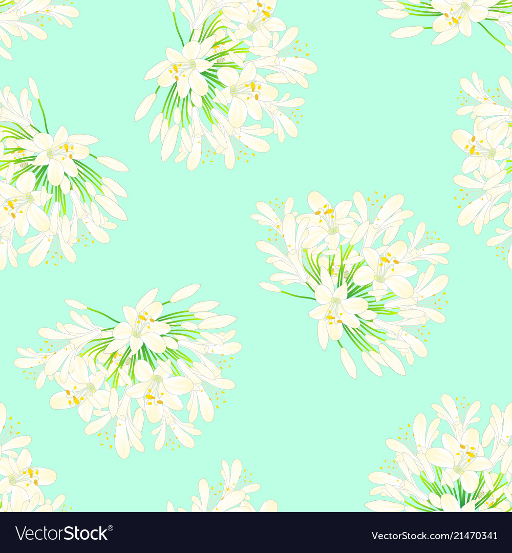Snow White Agapanthus On Green Mint Background Vector Image