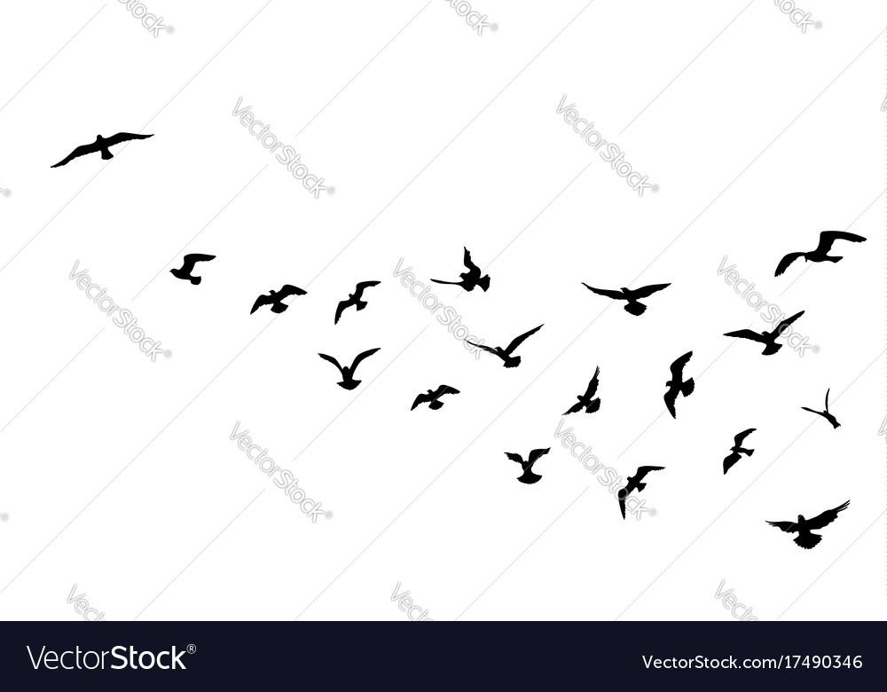 Bird flock flying over blue sky background animal