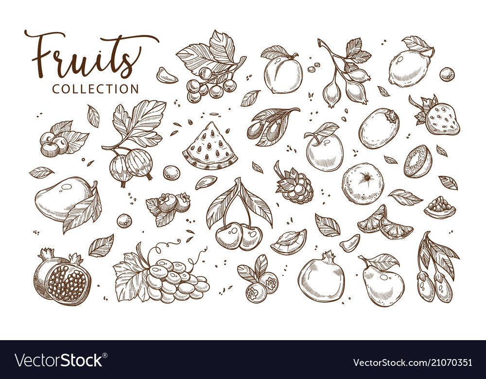 Natural tasty fruits collection of monochrome