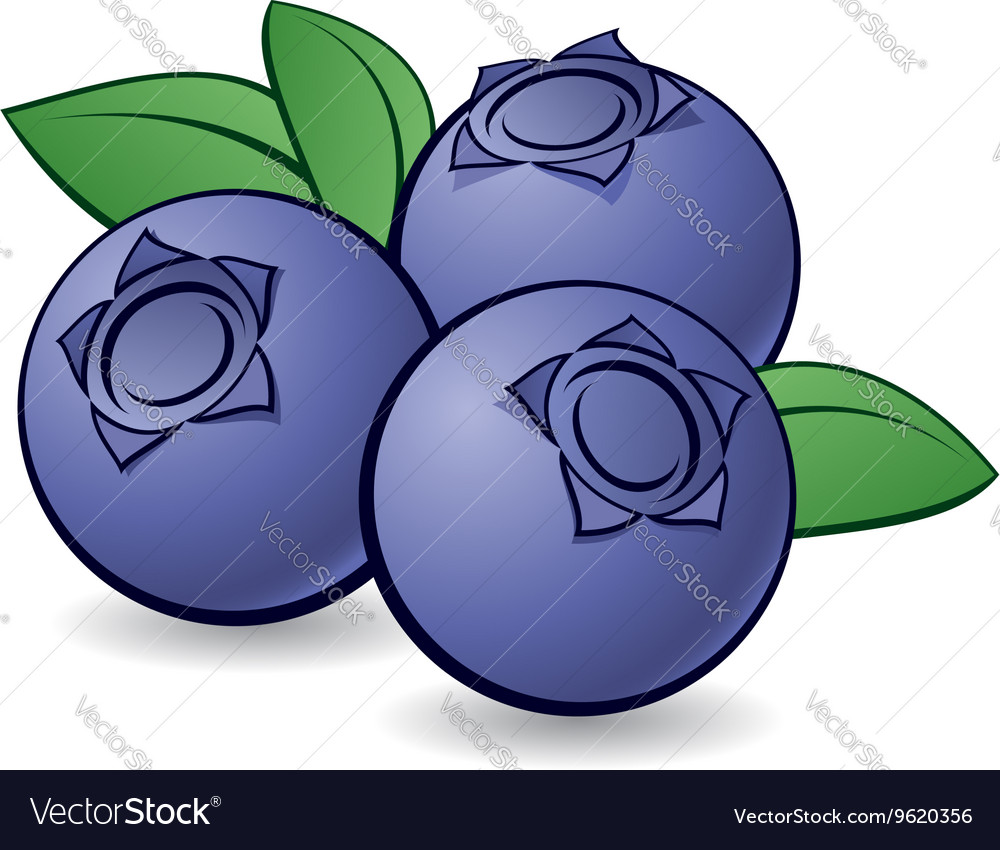 Blueberries 01 Royalty Free Vector Image - VectorStock