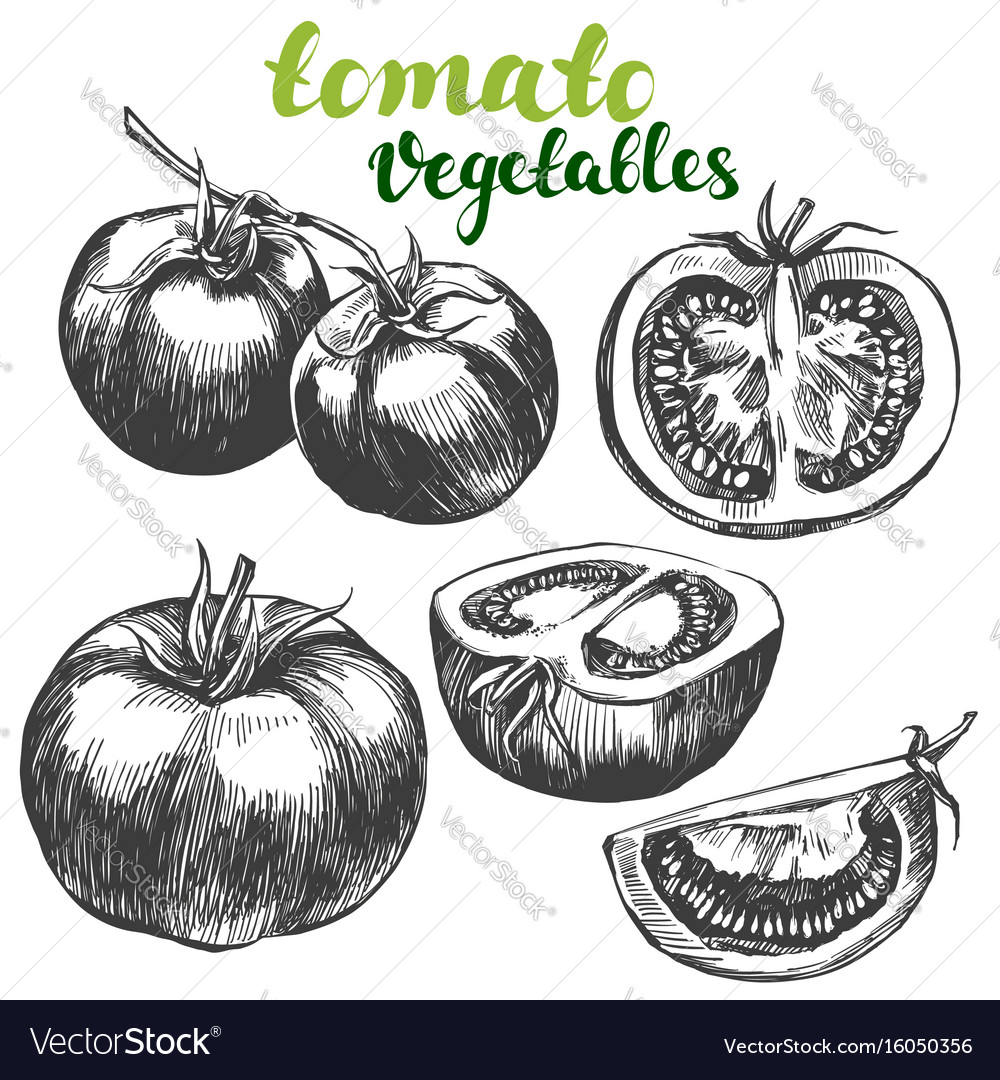 Tomato vegetable set hand drawn