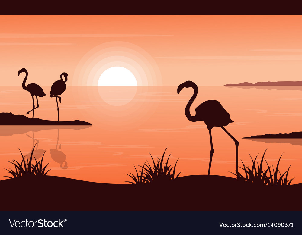 Beauty landscape of flamingo at sunset silhouettes