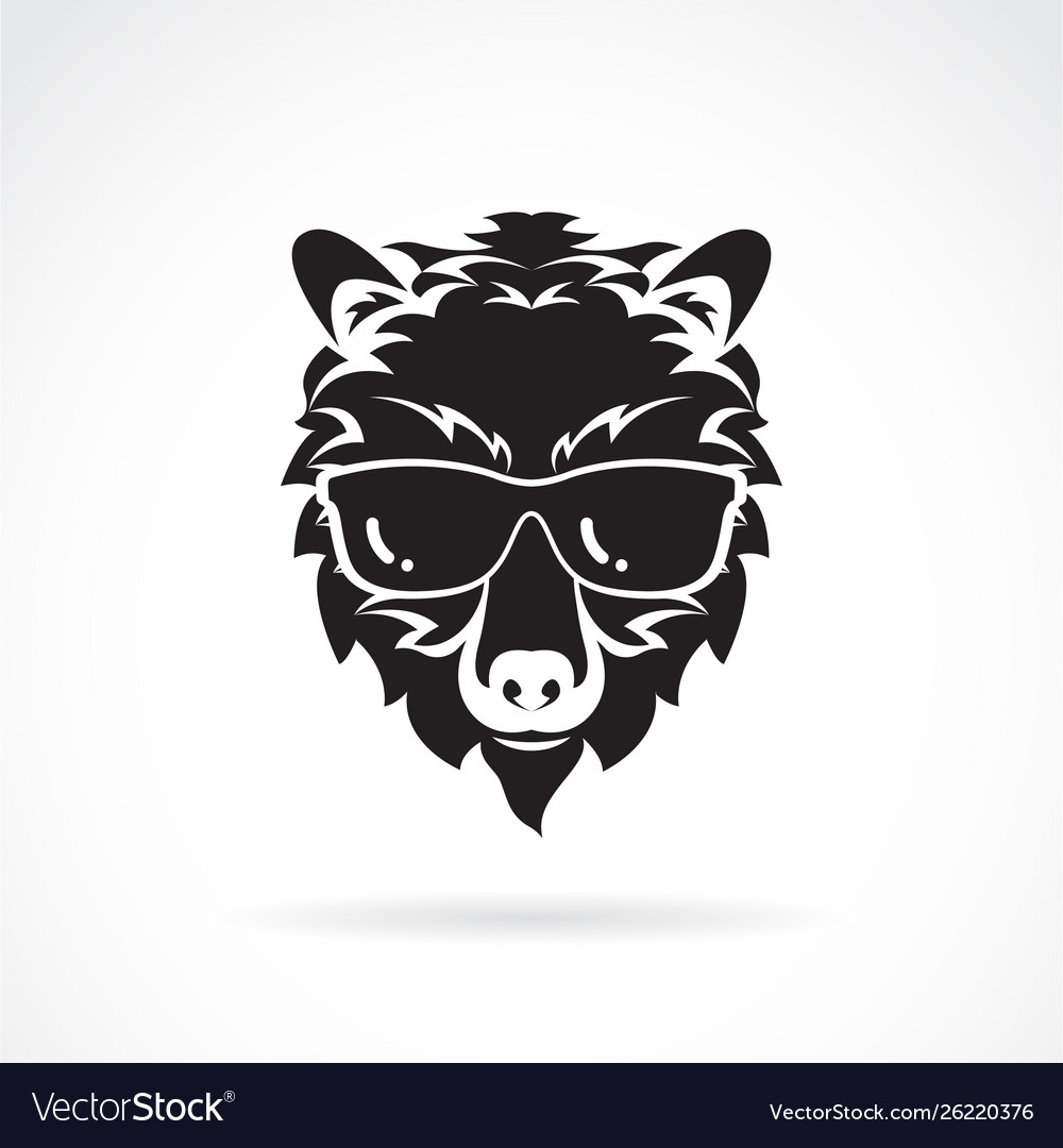 Bear wear sunglasses on white background wild