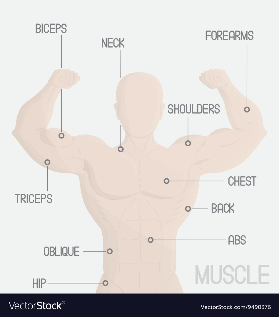 Male part muscle gym