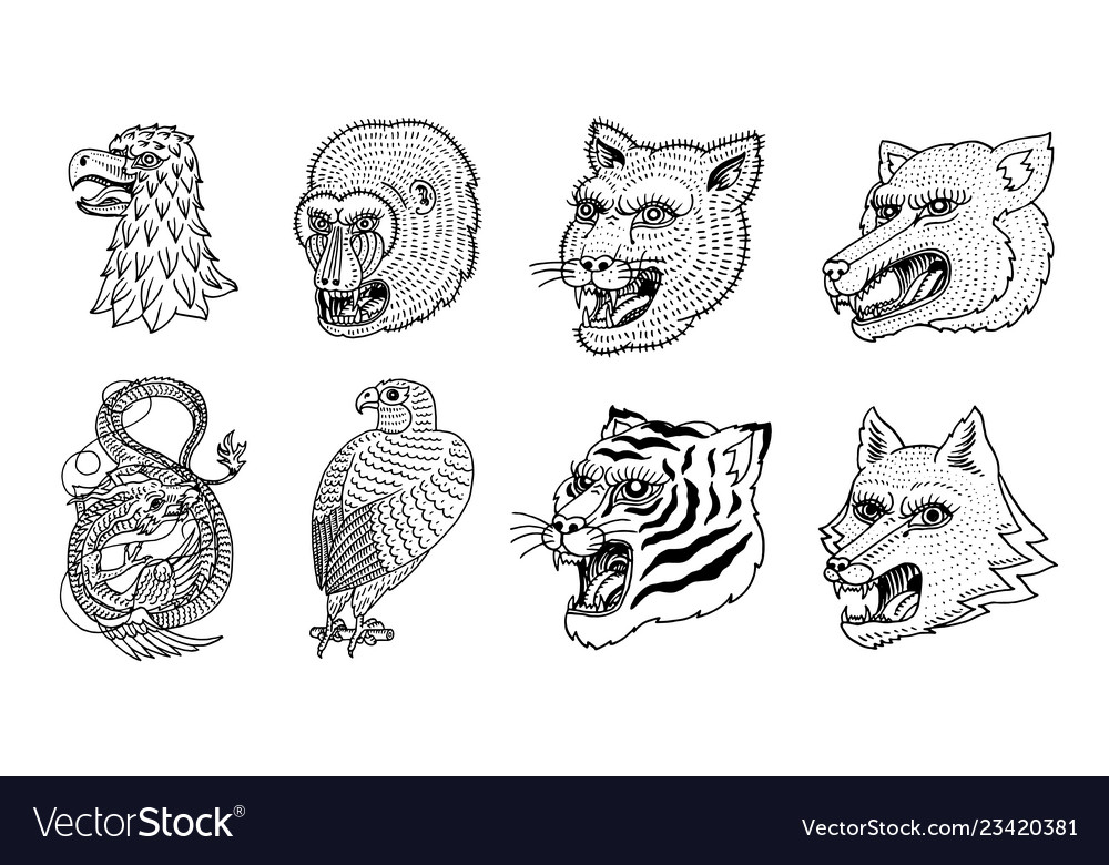 Head of wild animal predator puma wolf fox tiger
