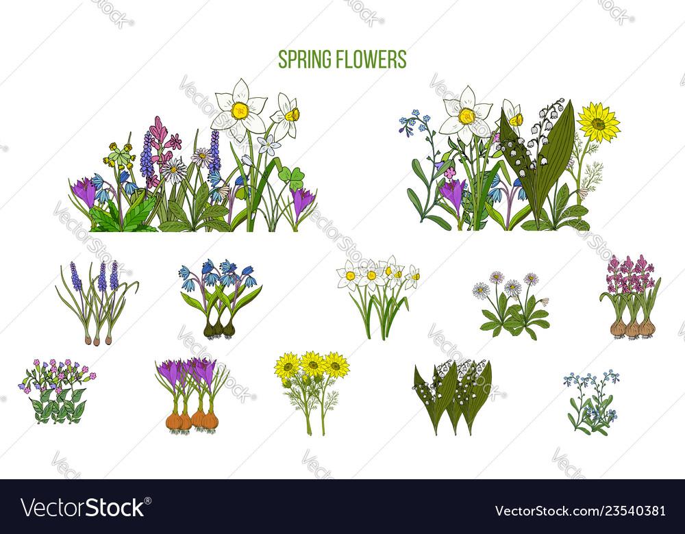 Spring flowers set crocus scilla primula