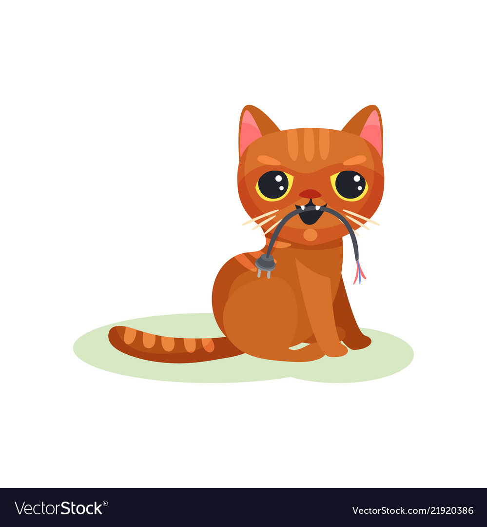 Animal Behaviour Vector Images 61 Naughty Kitten Gnawing Wire With Plug Mischievous 21920386 Vectors Sleeping Coloring Page