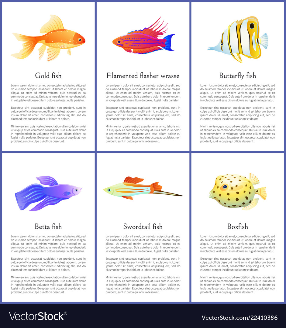 Set marine and domestic fishes color banners