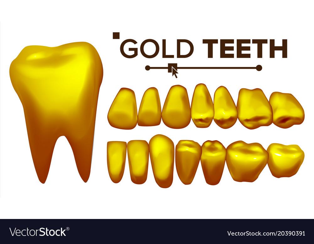 Golden tooth metal gold human teeth Royalty Free Vector