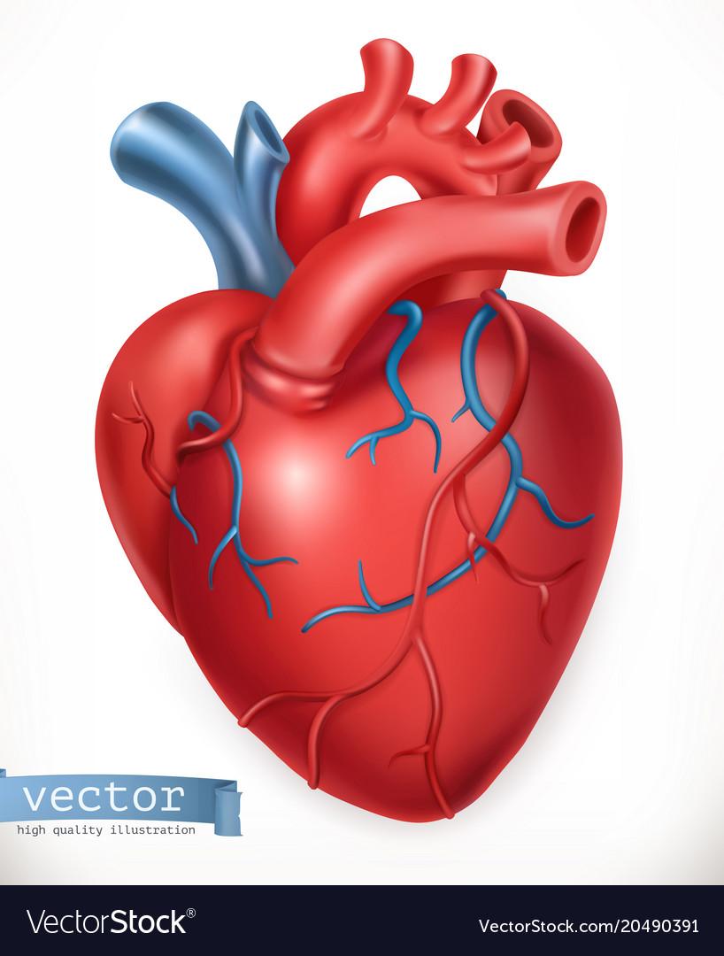 Human Heart Medicine Internal Organs 3d Icon Vector Image