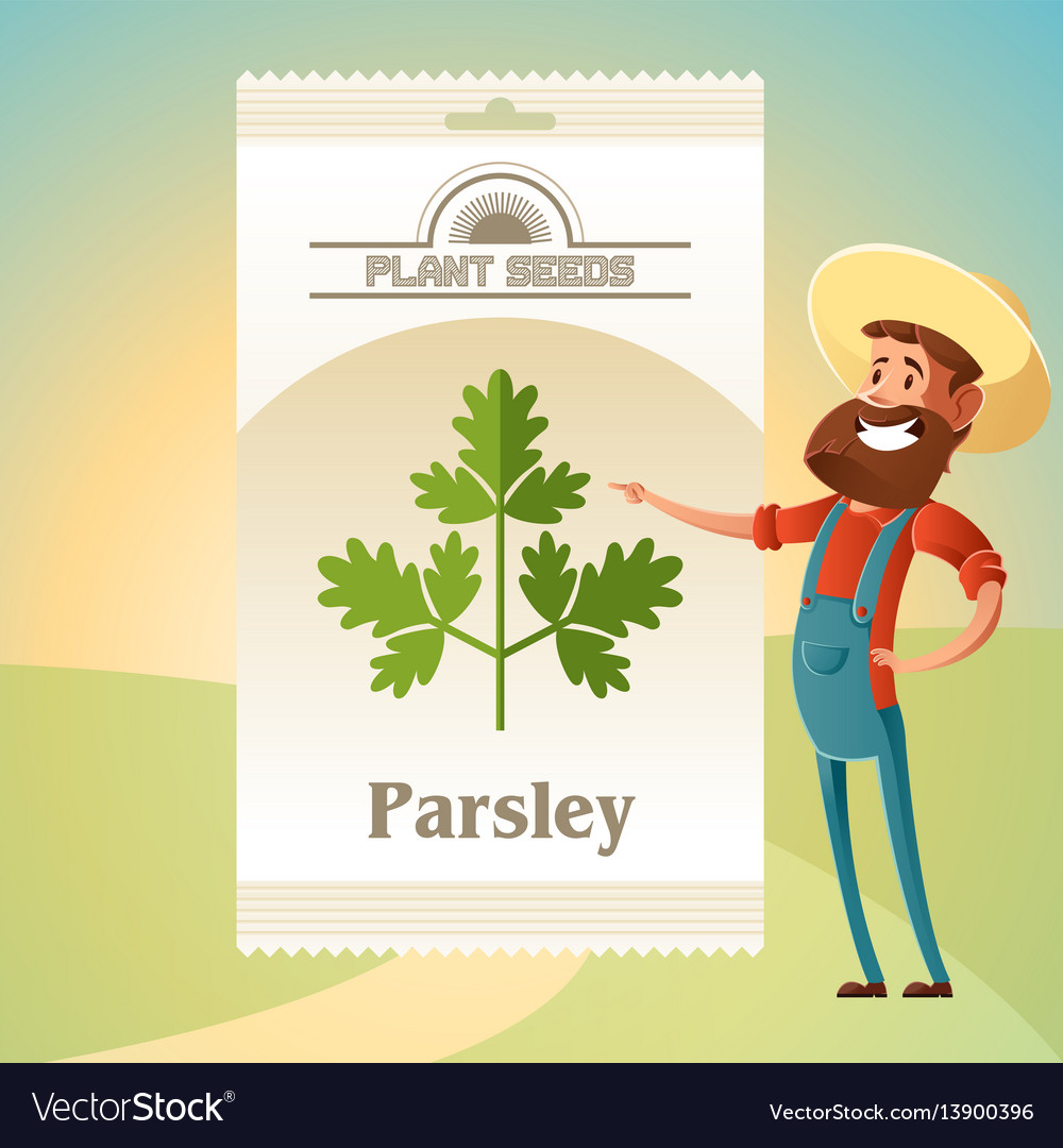 Pack of parsley seeds icon vector image