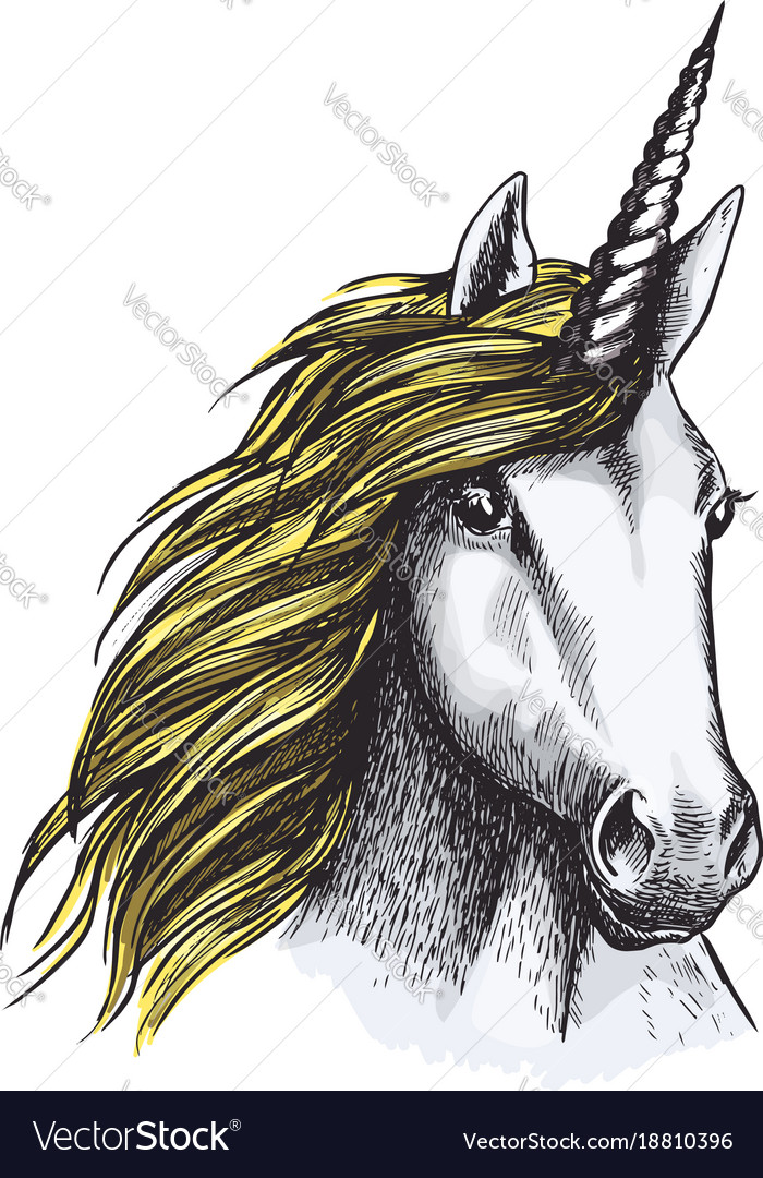Sketch Unicorn Horse Mystic Magic Animal Vector Image