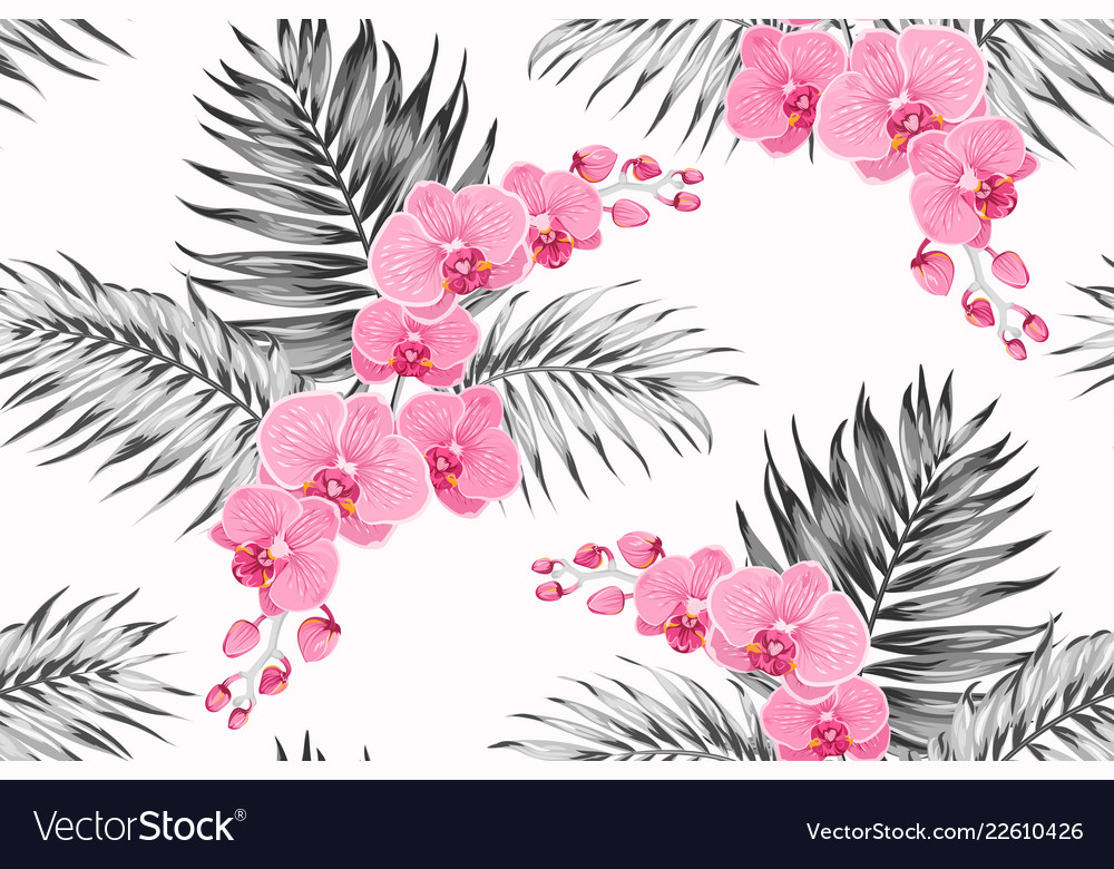 Bright pink purple orchid phalaenopsis exotic